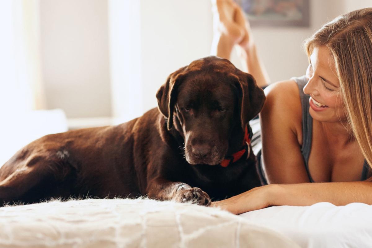 Wo soll mein Hund schlafen? Das musst Du unbedingt beachten!