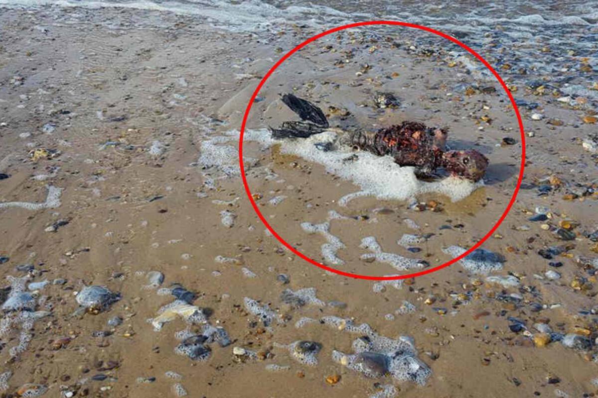 Meerjungfrau Skelett Gefunden