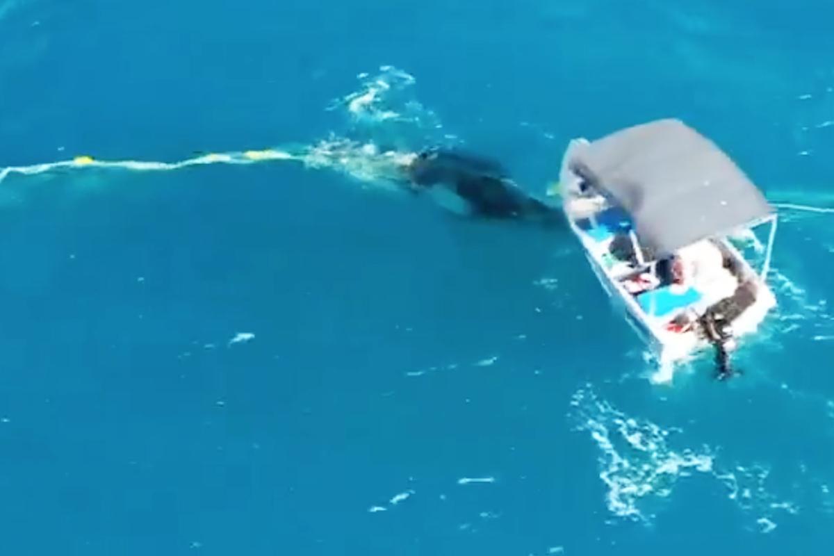 Horrende Strafe droht, weil Mann einen Baby-Wal rettet