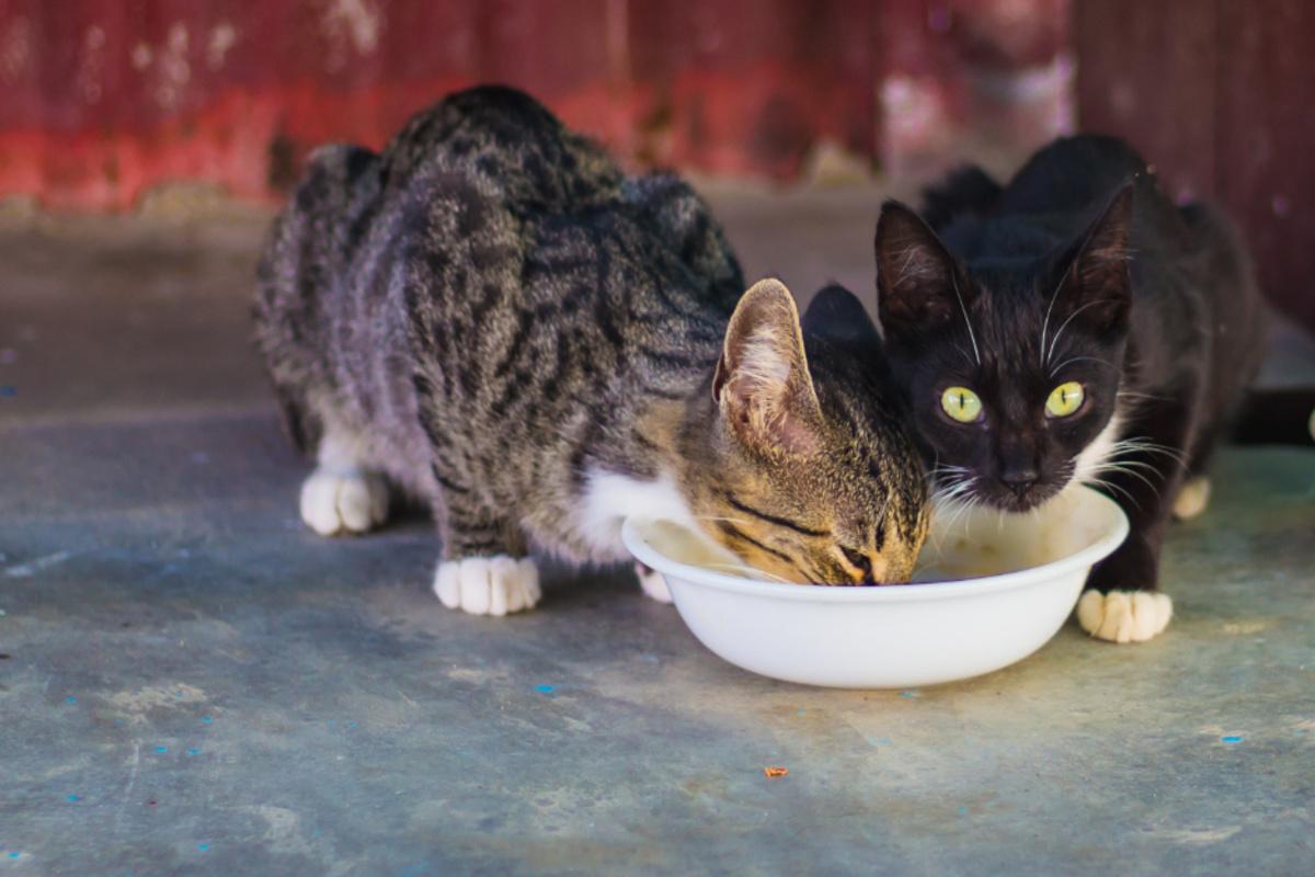 Eure Katze frisst zu viel und zu schnell? Das könnt Ihr