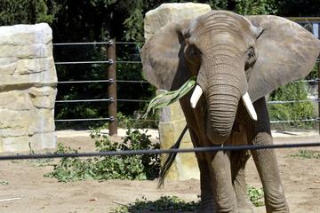 Sandbank, Kuschelecke und vieles mehr: Das ist der neue Spielplatz für die Elefanten