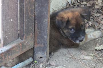 Besonderes Engagement wird geehrt: NRW schreibt erstmals Tierschutzpreis aus