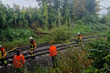 Baum in Oberleitung gekracht: Bahnstrecke zwischen Elmshorn und Tornesch wieder frei