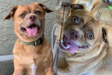 Dieser Hund begeistert mit einem ganz besonderen Talent Zehntausende auf Instagram