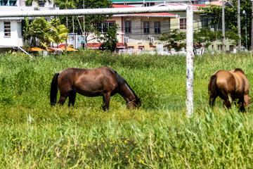 ¡Los caballos asaltan el campo de fútbol!  Escenas extrañas en el área de la clase de kick.