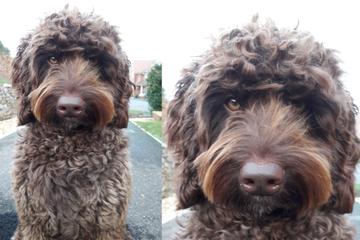 Frau will von Brücke springen: Dann vollbringt dieser Hund etwas Erstaunliches
