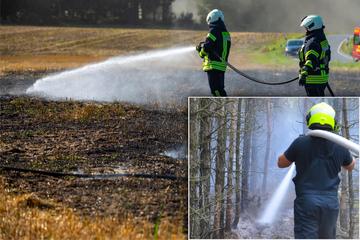 Feld bei Bischofswerda und Wald nahe Spremberg in Flammen