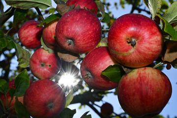 Verband warnt vor höherem Mindestlohn: Obst bald nicht mehr aus Deutschland?