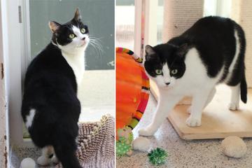 Autounfall, Schwanzabriss und nun schon wieder im Tierheim: Hat Katze Saskia denn gar kein Glück?
