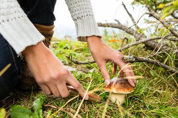Hochsaison für Pilzsammler in Thüringens Wäldern