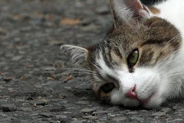 Bestialische Tat: Tierquäler zerteilen Katze!