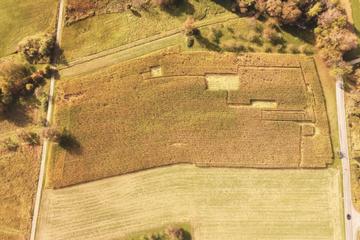 Täter verwüsten Maisfeld und hinterlassen kurioses Muster