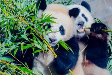 Wegen Unwetterwarnung: Zoo und Tierpark macht am Donnerstag dicht