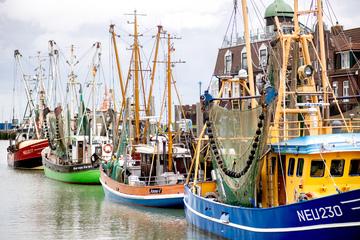"""Havarie zweier Boote am Wochenende! """"Möwe"""" und """"Seeteufel"""" versinken im Hafen"""