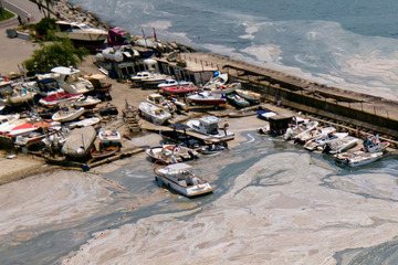 Katastrophe für Ökosystem: Meeresrotz treibt im Wasser