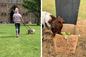 Hundesitterin findet Karton, auf dem Nachricht steht, die ihr Tränen in die Augen treibt