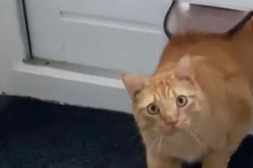 Katze taucht im falschen Haus auf: Ihre Reaktion ist unbezahlbar!