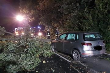 Leipzig: Nach Crash mit angesägtem Baum im Landkreis Leipzig: Polizei sucht Zeugen!