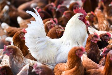 Weltweit erster Mensch mit H10N3-Vogelgrippe infiziert: Steht uns die nächste Pandemie bevor?