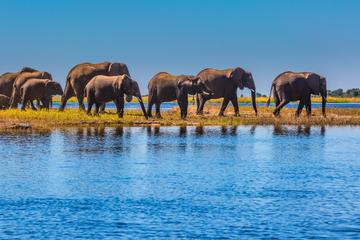 Bis zu 130.000 Elefanten bedroht: Massives Ölfeld inmitten der Wildnis sorgt für Entsetzen