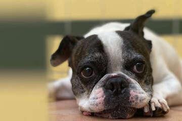 Hund versteht die Welt nicht mehr: Das ist der traurige Grund
