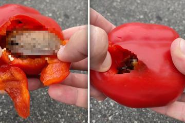 Widerlich! Was krabbelt denn da aus dieser Paprika?