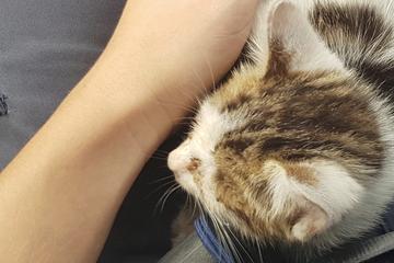 Tierischer Einsatz: Polizei rettet Kätzchen aus Motorraum