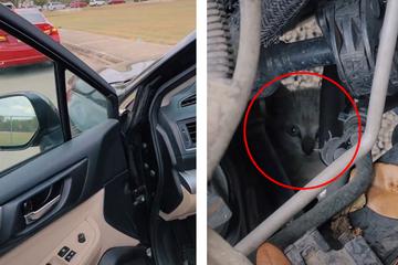 Frau findet Katze in Motorraum: Einen Tag später fällt sie aus allen Wolken!