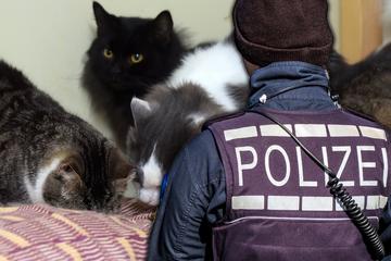 Mann (42) hortet ein Dutzend Katzen in seinem Haus: Die Polizei beunruhigt aber etwas anderes