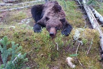 Bär geht auf Touristen in Nationalpark los und tötet 16-Jährigen