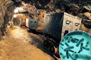 Zukunft des Bergbaus im Erzgebirge? So funktioniert Rohstoff-Gewinnung mit Bakterien
