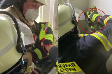 Was ist hier passiert? Feuerwehr bohrt Katze aus der Wand!