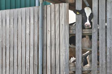 Allgäuer Tierschutz-Skandal: Erster Prozess und weitere Anklagen