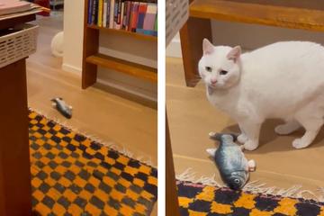 Katze verhält sich plötzlich merkwürdig: Was dann passiert, haut ihre Besitzerin um