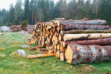 Bei Waldarbeiten: Baumstamm rollt auf Fuß von 64-Jährigem und klemmt ihn ein!