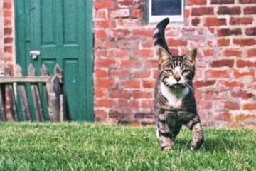 Katze ist seit zehn Jahren verschwunden: Was dann passiert, haut ihre Besitzer total um