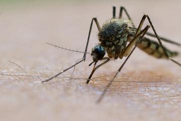 Milliarden-Plage steht bevor! Mückenforscher mit düsteren Aussichten