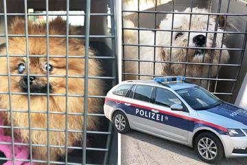 """Messis haben trotz Tierhaltungsverbot mehrere Hunde: """"Skrupellos, alles ist noch schlimmer!"""""""