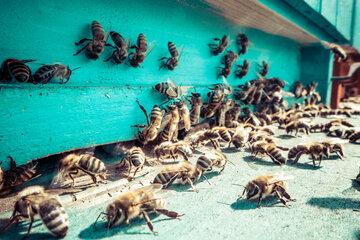 Mann wird von einem Schwarm Bienen attackiert – kurz darauf ist er tot