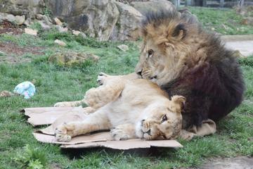 Gefahr für Mitarbeiter und Besucher: Zoo Erfurt bleibt auch am Freitag geschlossen