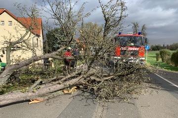 Warnung bleibt bestehen: Auch am Freitag Sturmböen in Sachsen erwartet