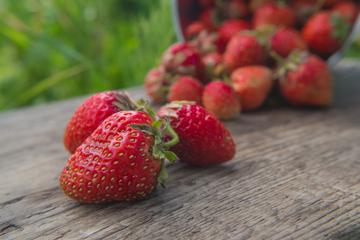 Mann (88) stürzt beim Erdbeerpflücken: Diebe bestehlen ihn