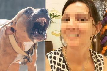 Sechs Pitbulls fallen über Mutter her und massakrieren sie!