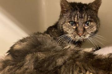 Halb verhungerte Katze vor dem sicheren Tod gerettet: Warum ist ihr Rücken geschoren?