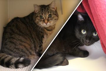 Mausi und Billy landen im Tierheim: Finden die Katzen nun endlich ein Happyend?