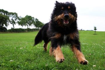 Mehrere Hunde greifen Joggerin an: Tiefe Bisse am ganzen Körper
