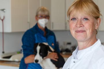 Demasiadas mascotas nuevas desde la pandemia: los veterinarios del norte están en el extremo