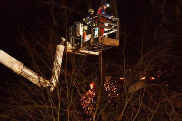 Hambacher Forst: Flammen zerstören Baumhaus, ein Mann schwer verletzt