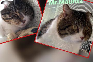 Katzen-Opa will endlich wieder glücklich sein: Mister Maunz sucht ein Zuhause
