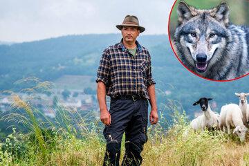 """Erzgebirgs-Schäfer bangt um Existenz: """"Wenn der Wolf zurückkehrt, muss ich aufhören"""""""
